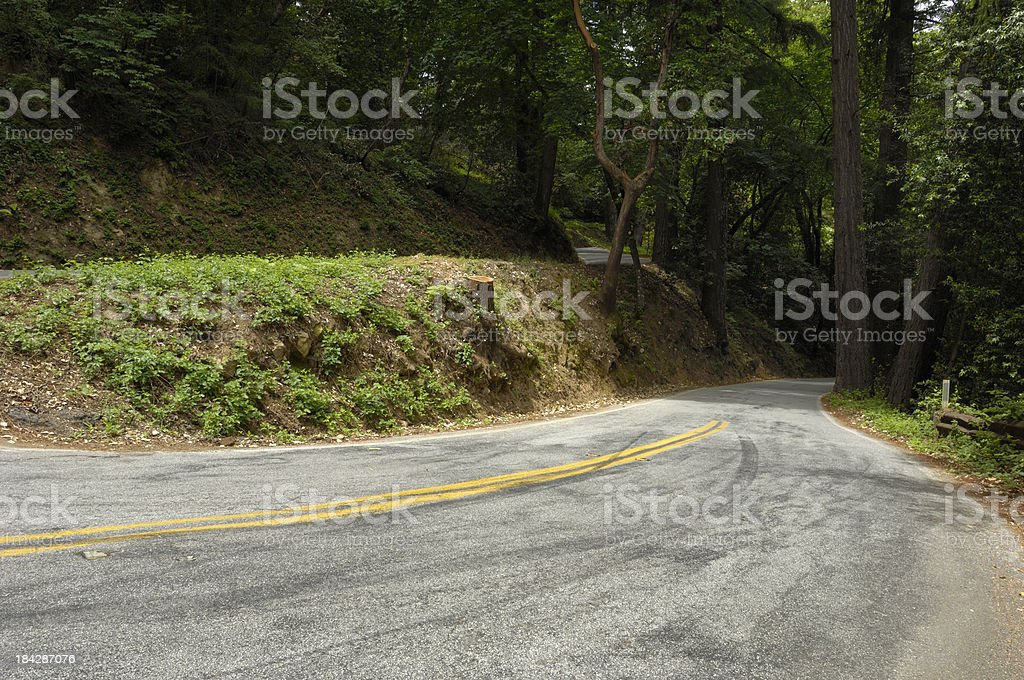 California Road Winding Through Madrone and Redwood Forest royalty-free stock photo