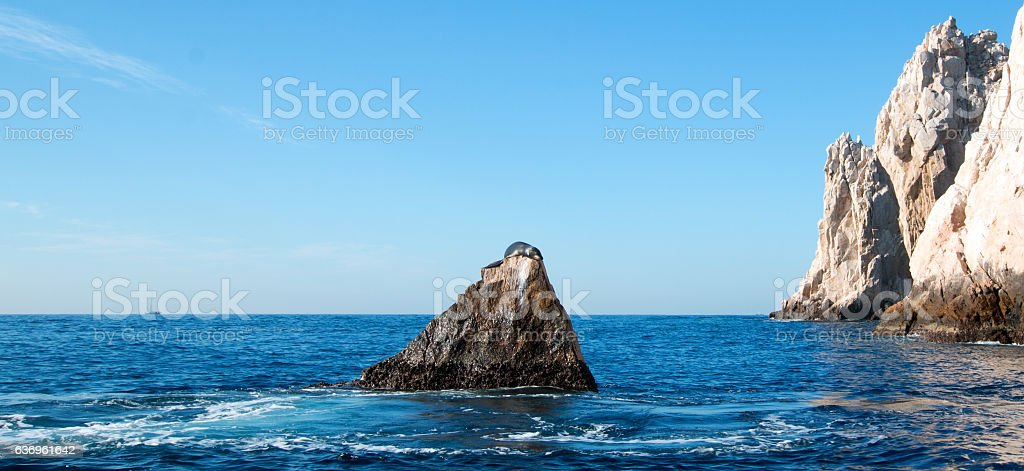 """California Sea Lion on """"the Point"""" with Pacific in background stock photo"""