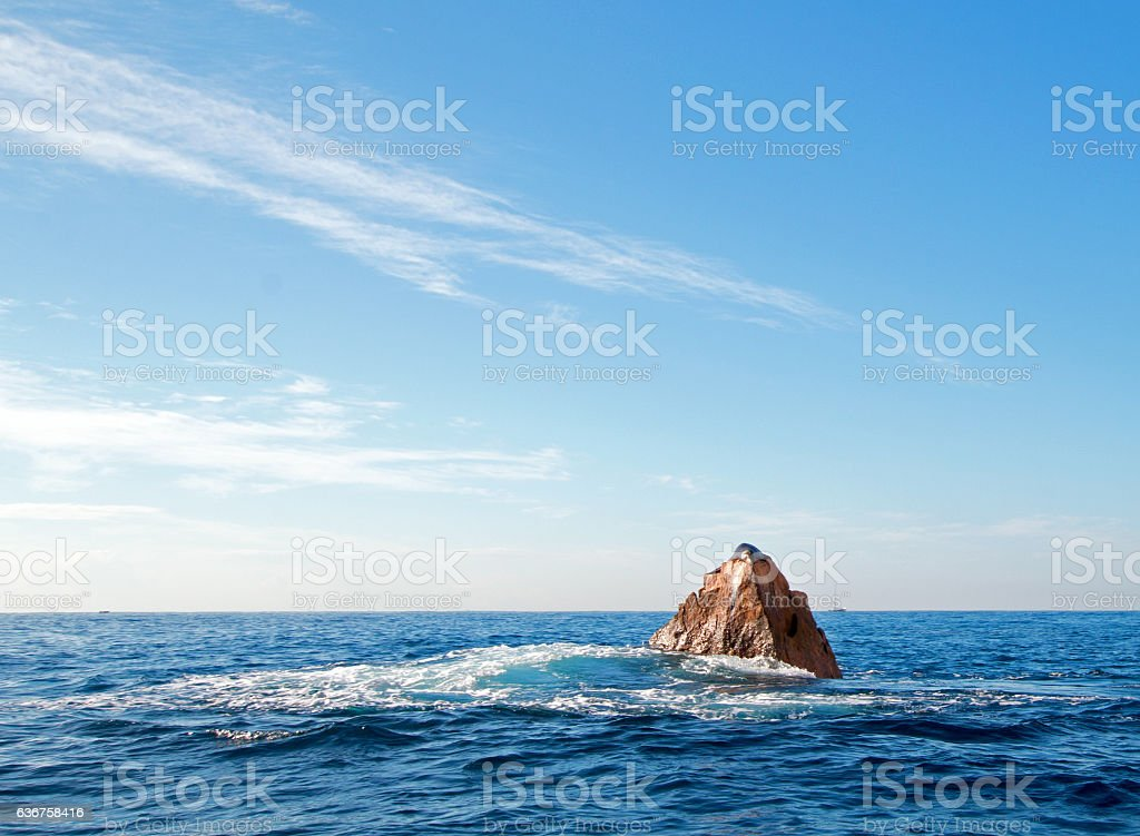 """California Sea Lion on top of """"Pinnacle of Lands End"""" stock photo"""