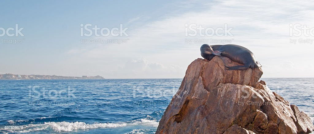 California Sea Lion resting on Los Arcos point in Cabo stock photo