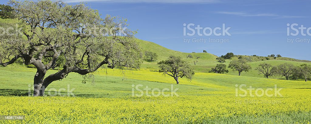 California Spring royalty-free stock photo