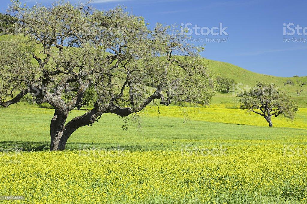California Spring stock photo