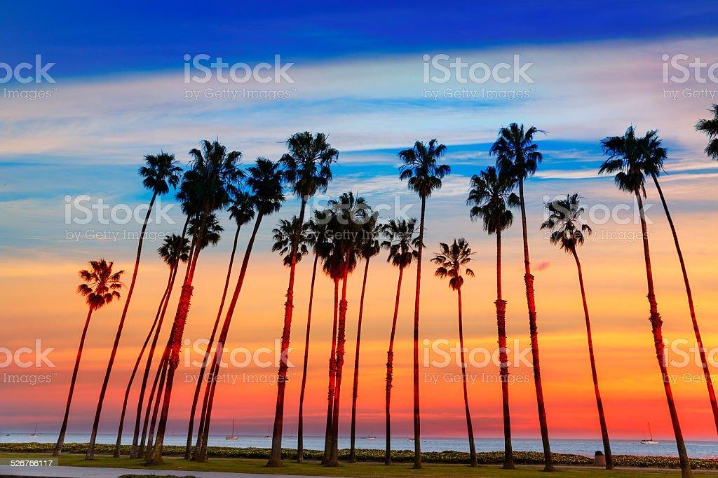 California sunset Palm tree rows in Santa Barbara stock photo