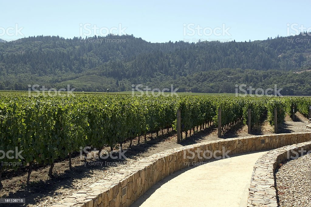 California: Vineyard royalty-free stock photo