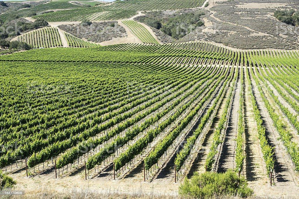 California Vineyard stock photo