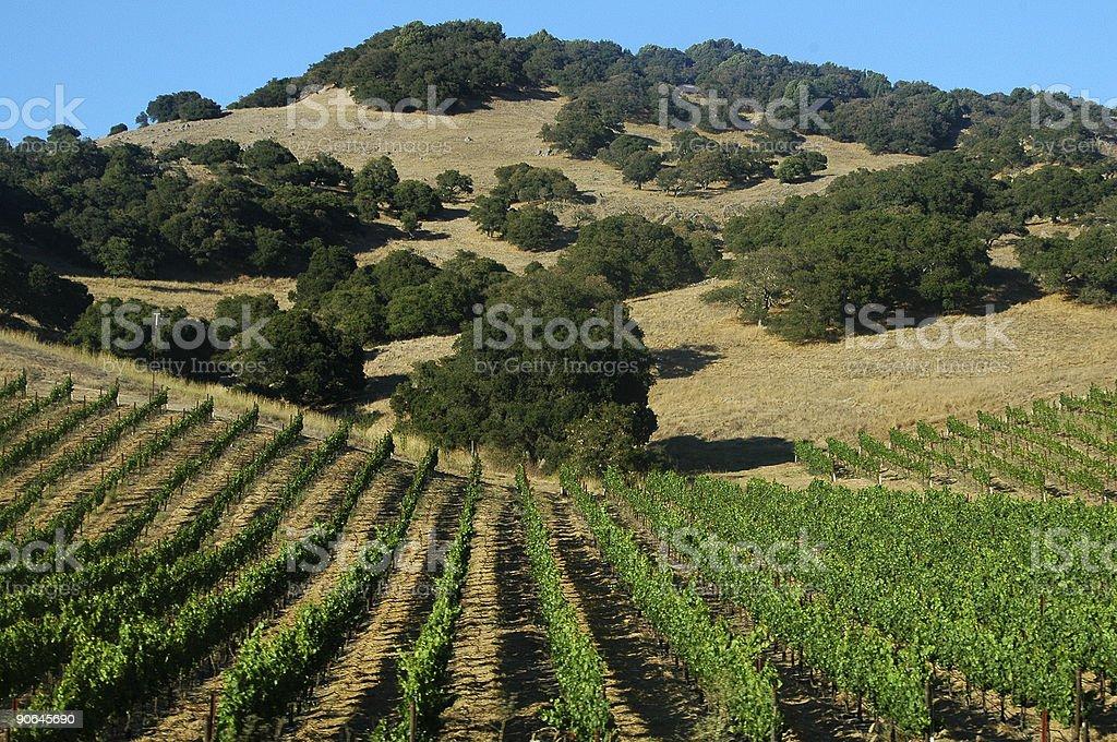 California Vineyard royalty-free stock photo