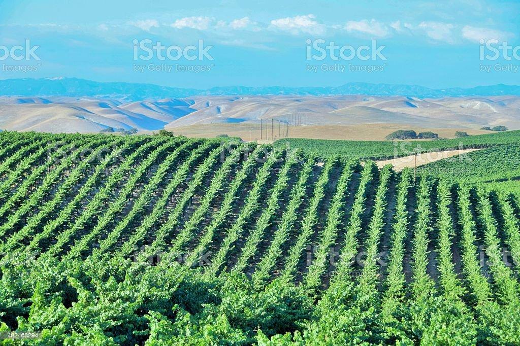 California Vineyard Wine Country stock photo