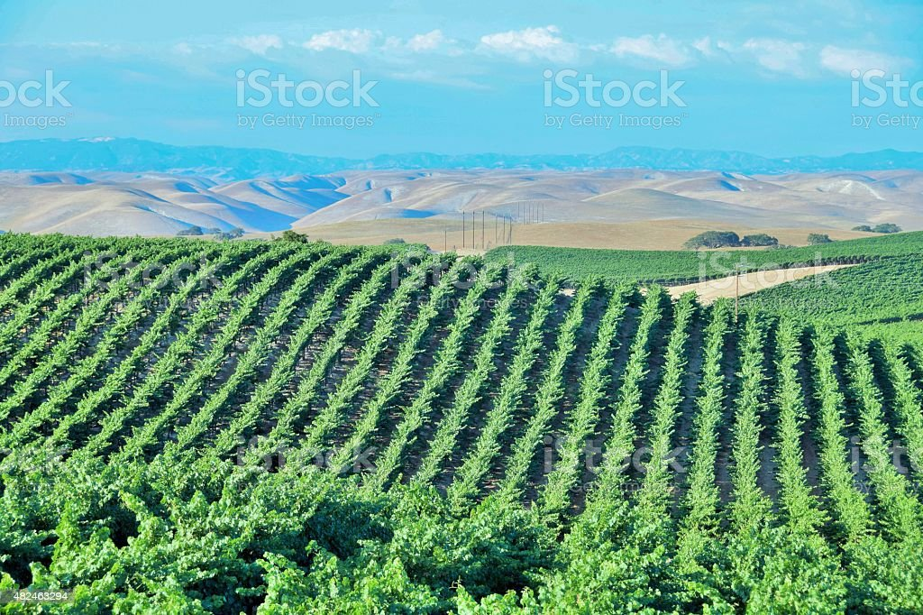 California Vineyard Wine Country stock photo