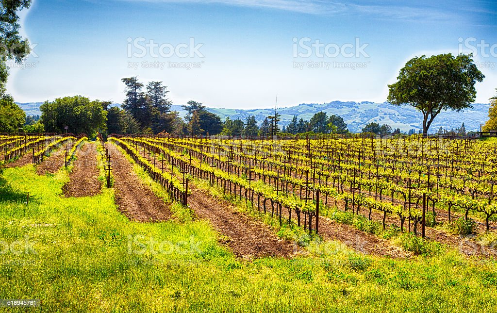California Vineyards stock photo
