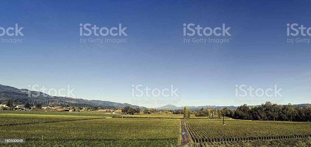 california wine country panorama stock photo