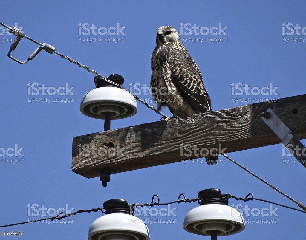 California X-Hawk Power stock photo