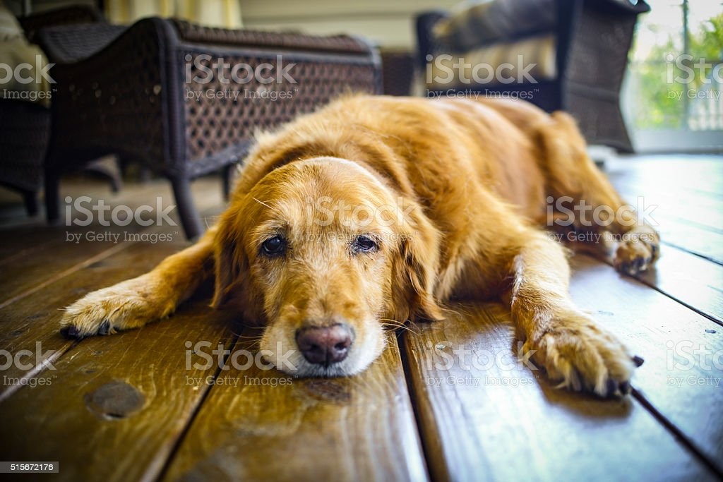 Cali's Last Day stock photo