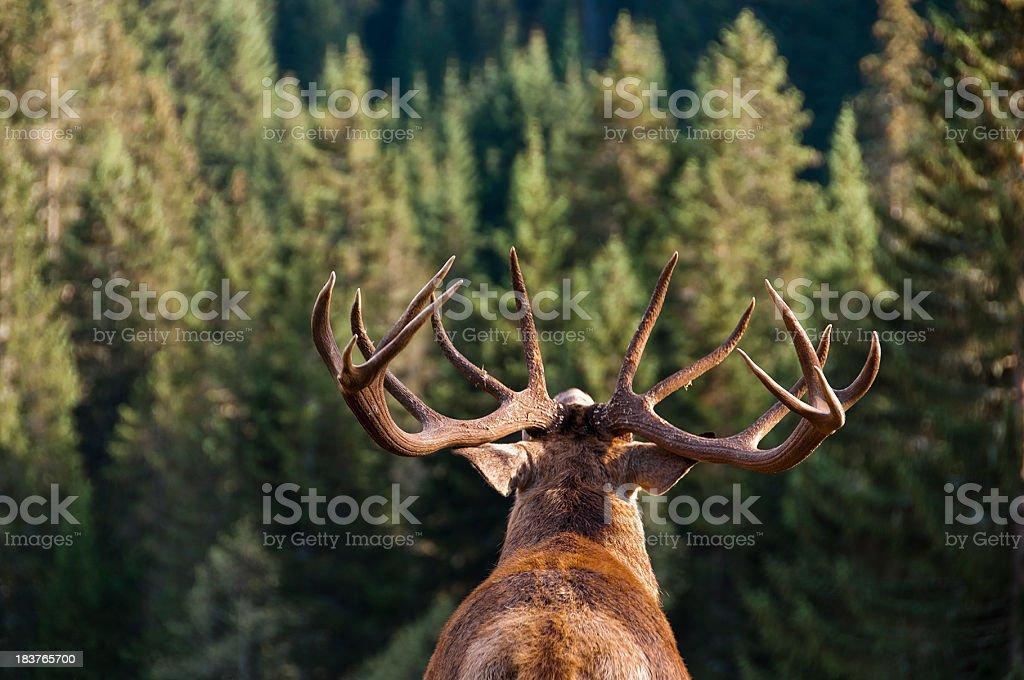 Call of the Wild stock photo