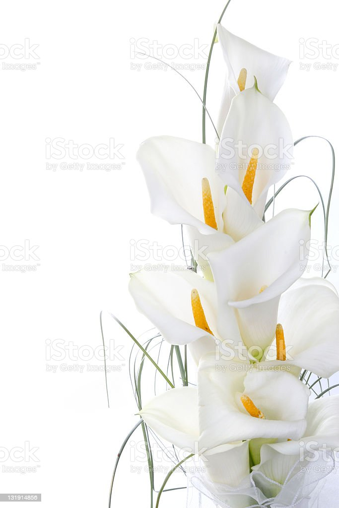 Calla lilies in bouquet stock photo