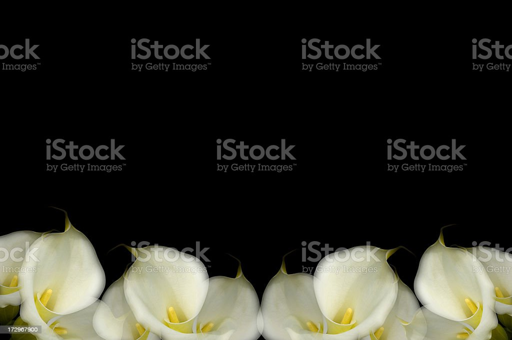 Calla Lily Artistic Background royalty-free stock photo