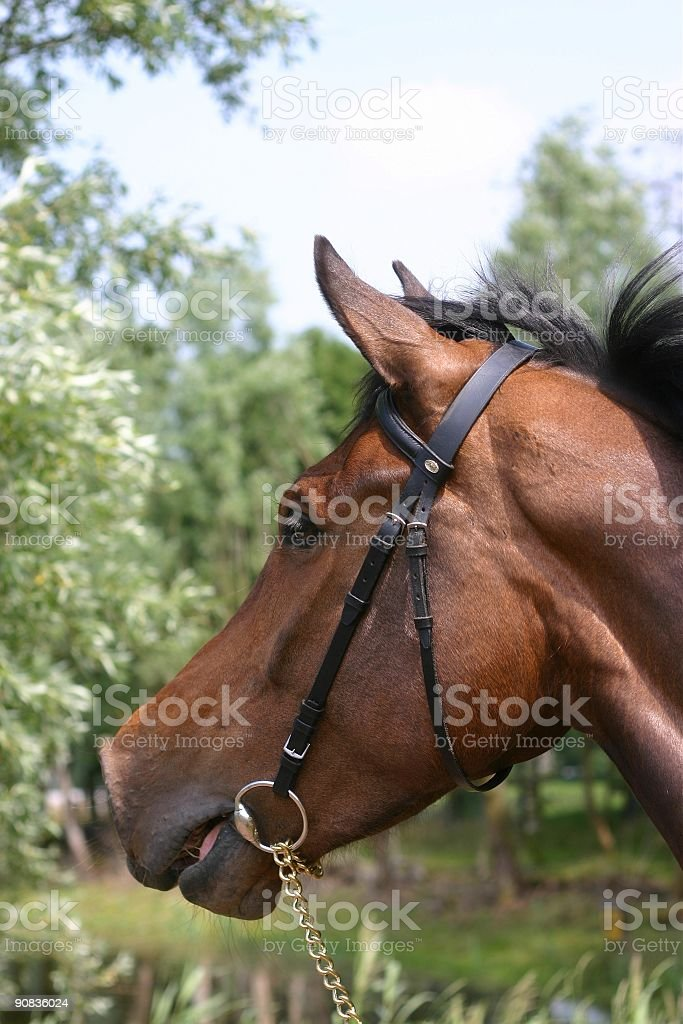 Calling to her friends stock photo