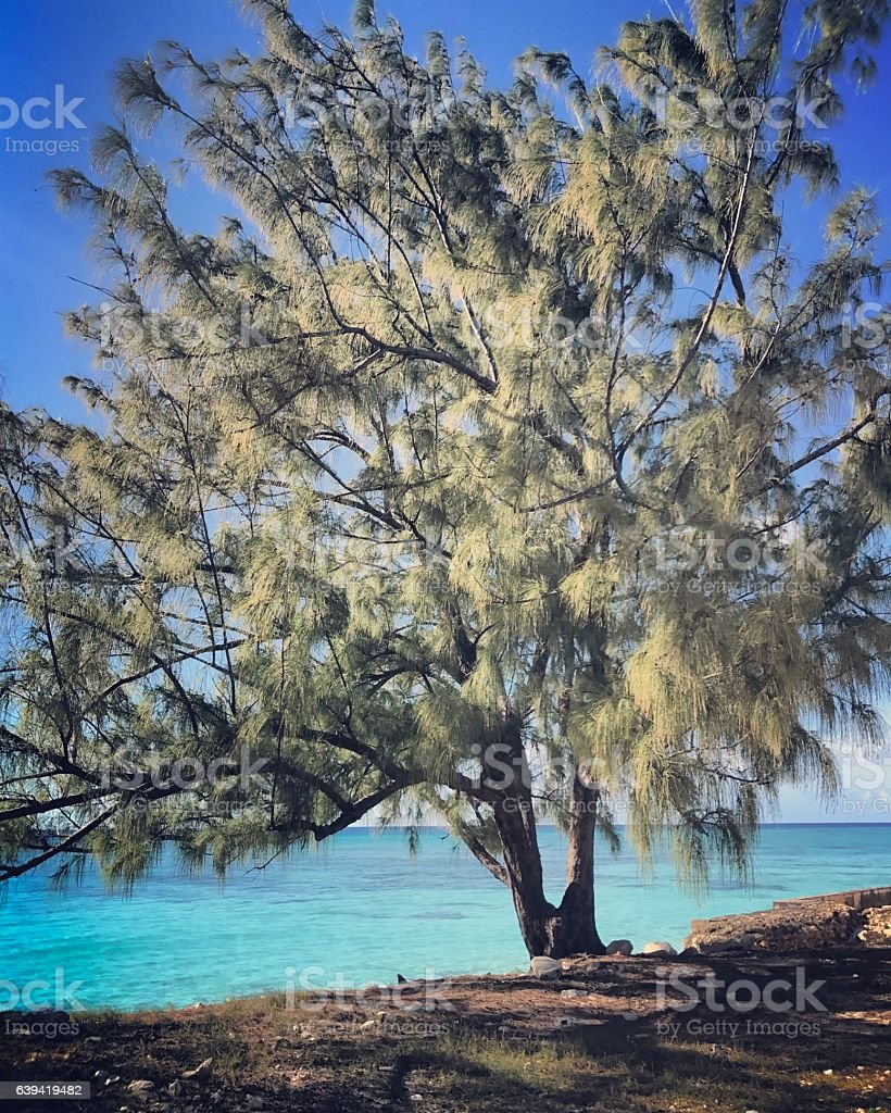 Calm and empty beach on Turks and Caicos Islands stock photo