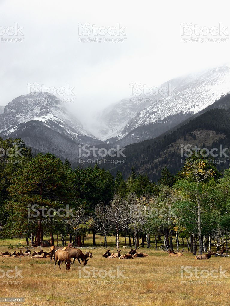 Calm before the Storm royalty-free stock photo