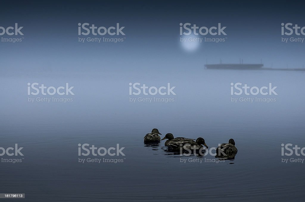 Calm foggy sea with birds royalty-free stock photo