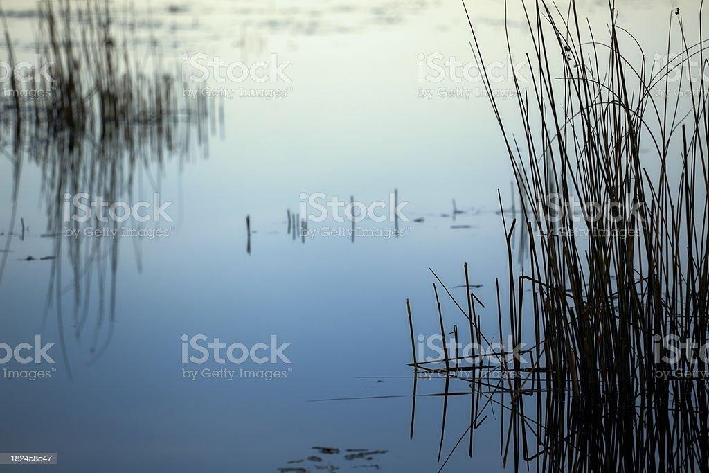 Calm marsh water royalty-free stock photo