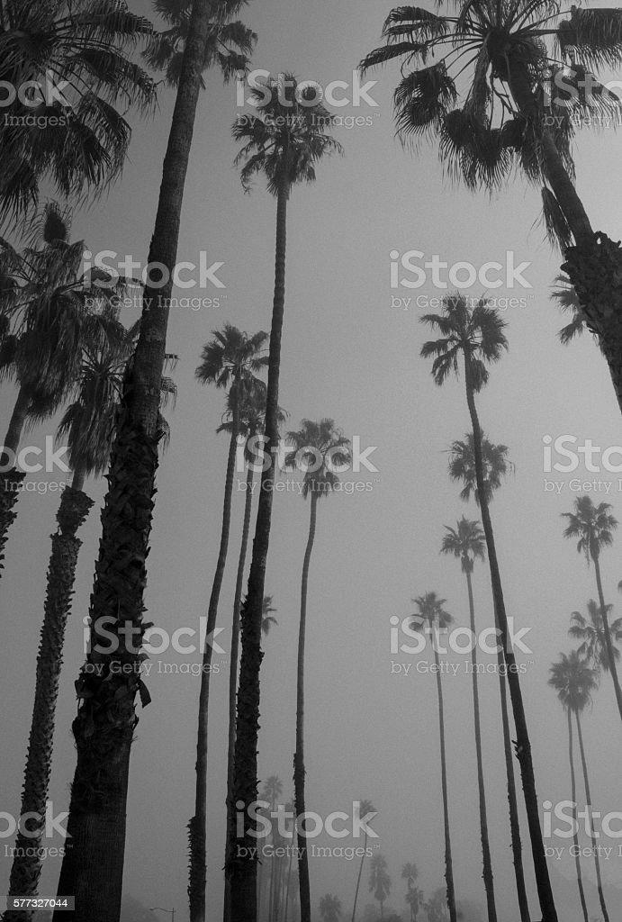 Calm on a Palm stock photo