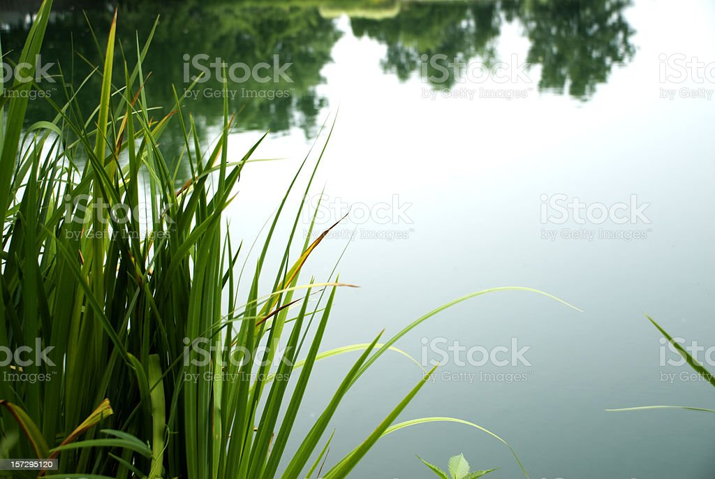 Calm Pond royalty-free stock photo