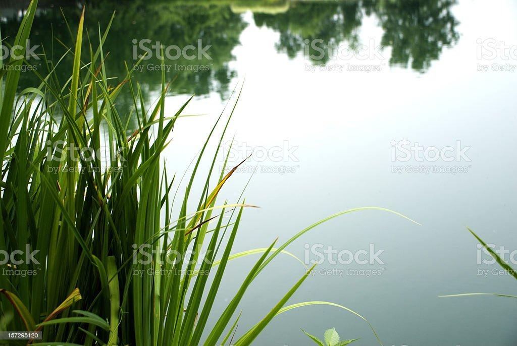 Calm Pond stock photo