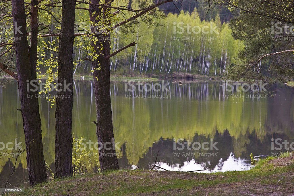 Calm river bank royalty-free stock photo