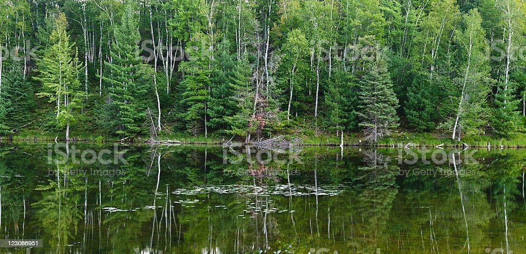 Calm Shoreline royalty-free stock photo