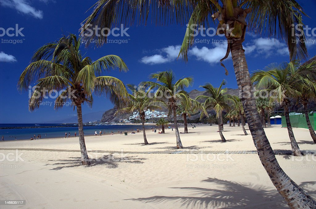 Calm tropical beach with palm trees royalty-free stock photo