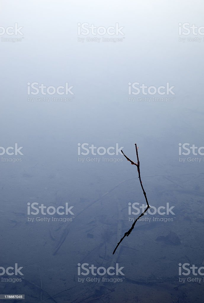 calm water and branch royalty-free stock photo