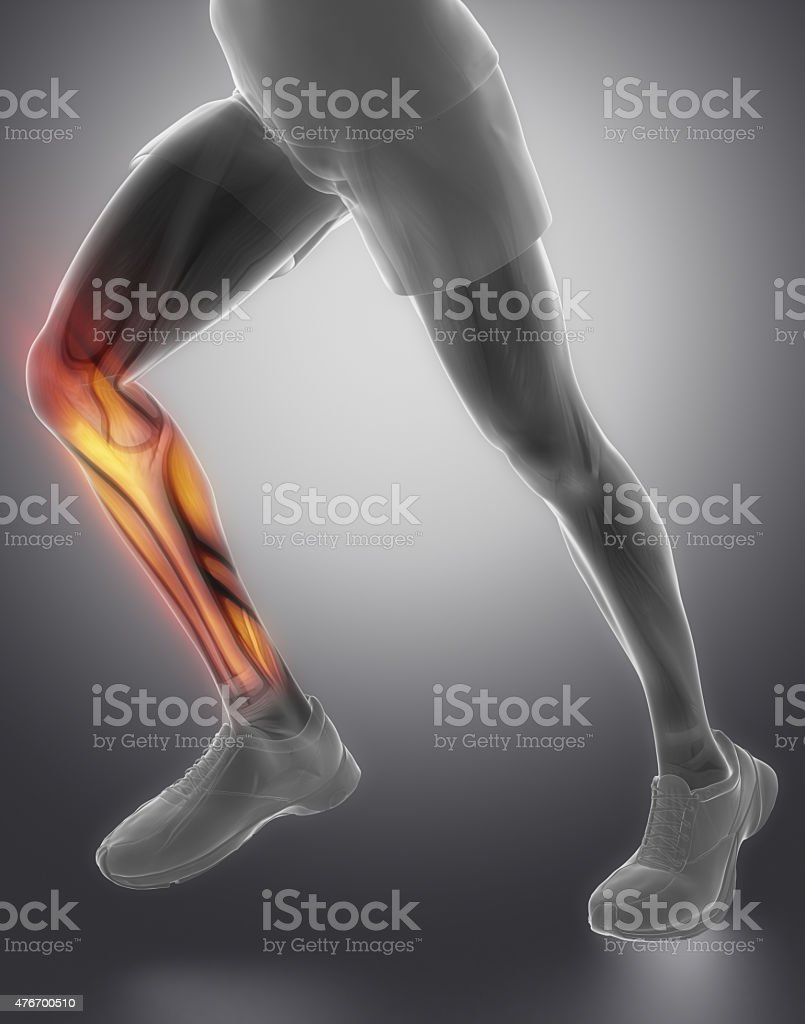 Calves muscle anatomy stock photo