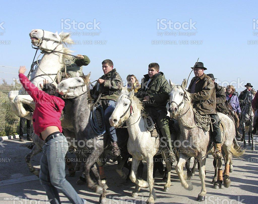 Camargue cowboys herding bull through village stock photo