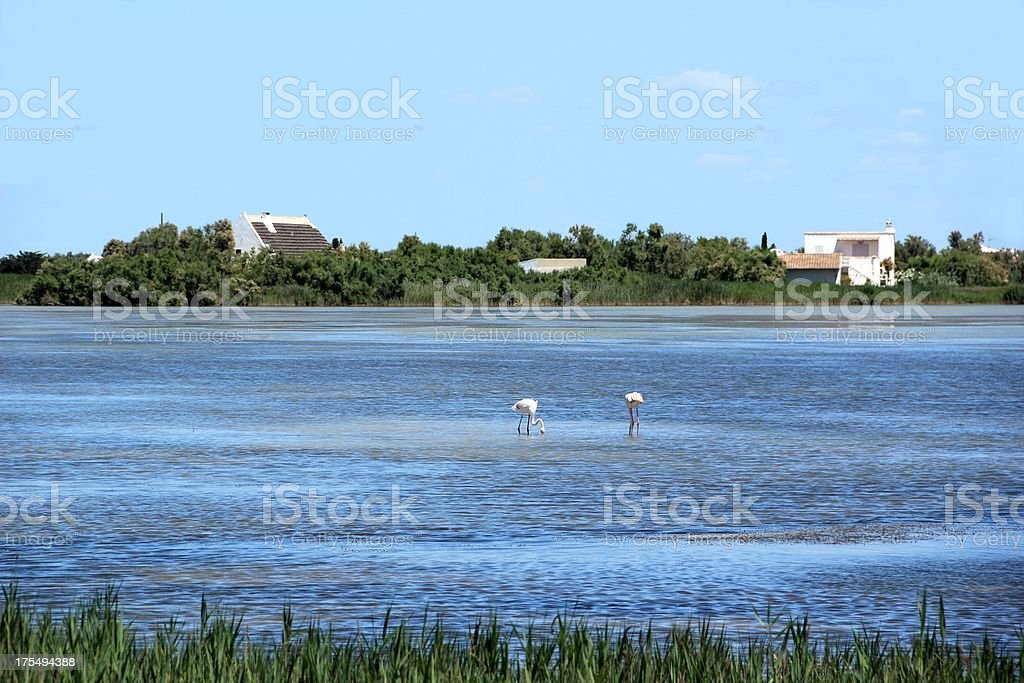 Camargue National Park, France royalty-free stock photo