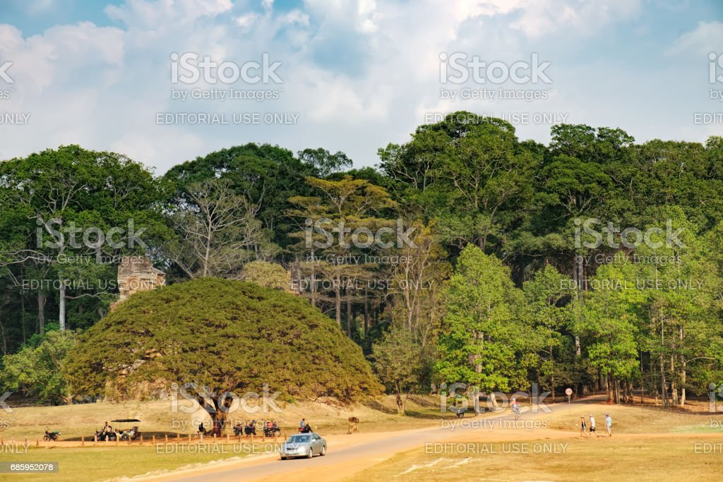 Cambodian road through fields and tropical forest stock photo