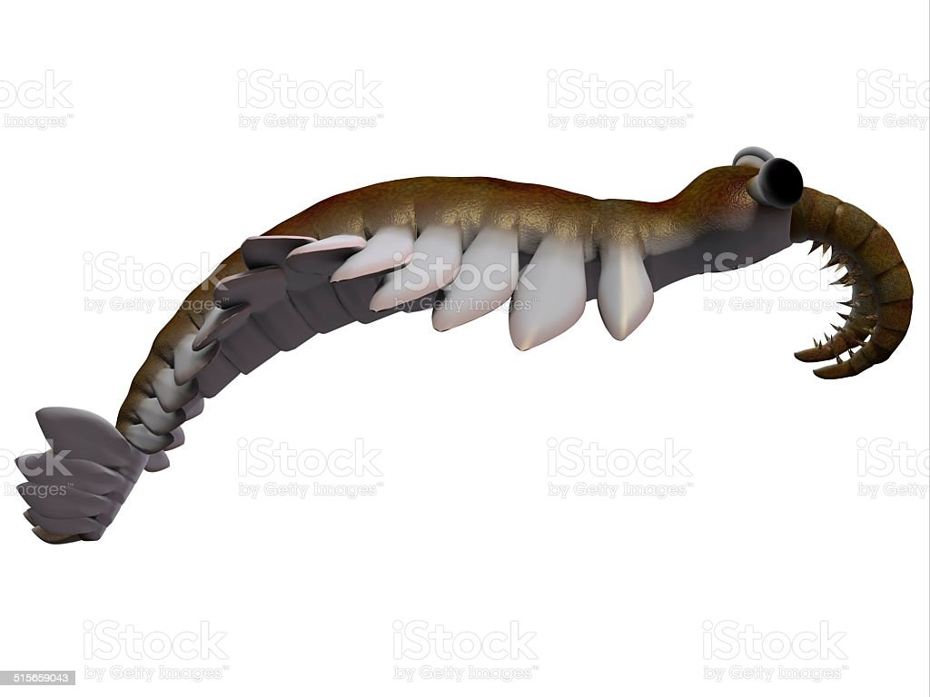 Cambrian Anomalocaris Side Profile vector art illustration