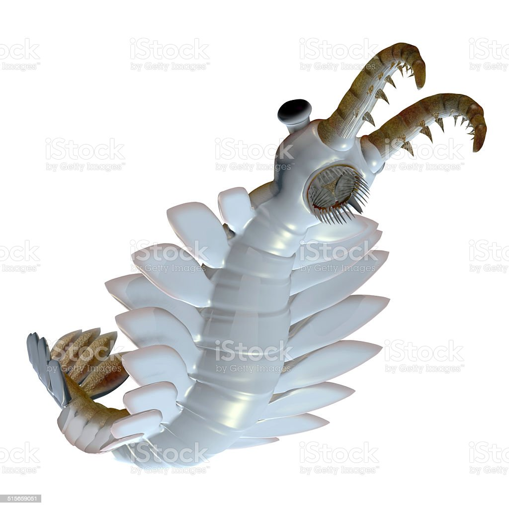 Cambrian Anomalocaris Underside vector art illustration