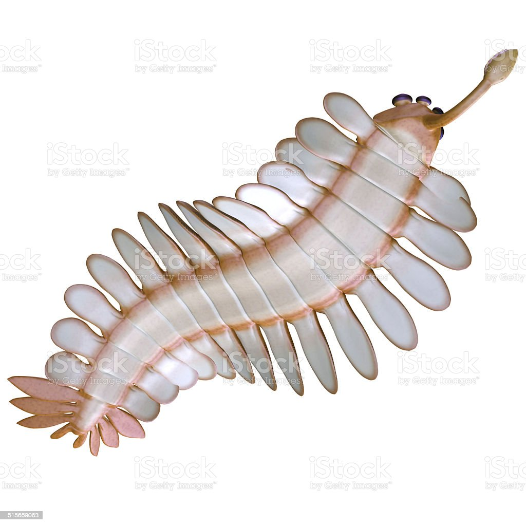 Cambrian Opabinia Underside vector art illustration