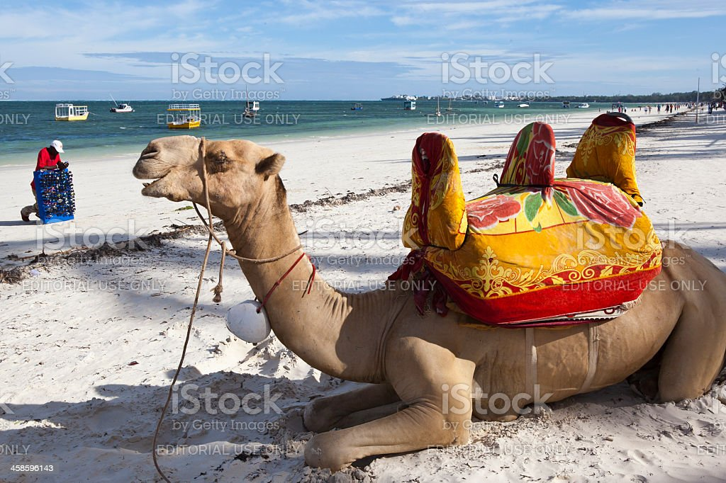 Camel and glasses seller at beach stock photo