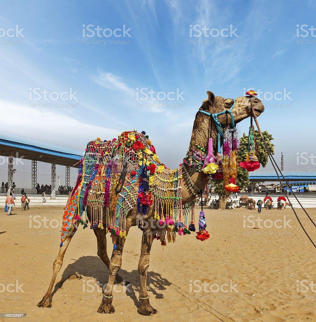 Camel at Pushkar Mela (Camel Fair),  India stock photo