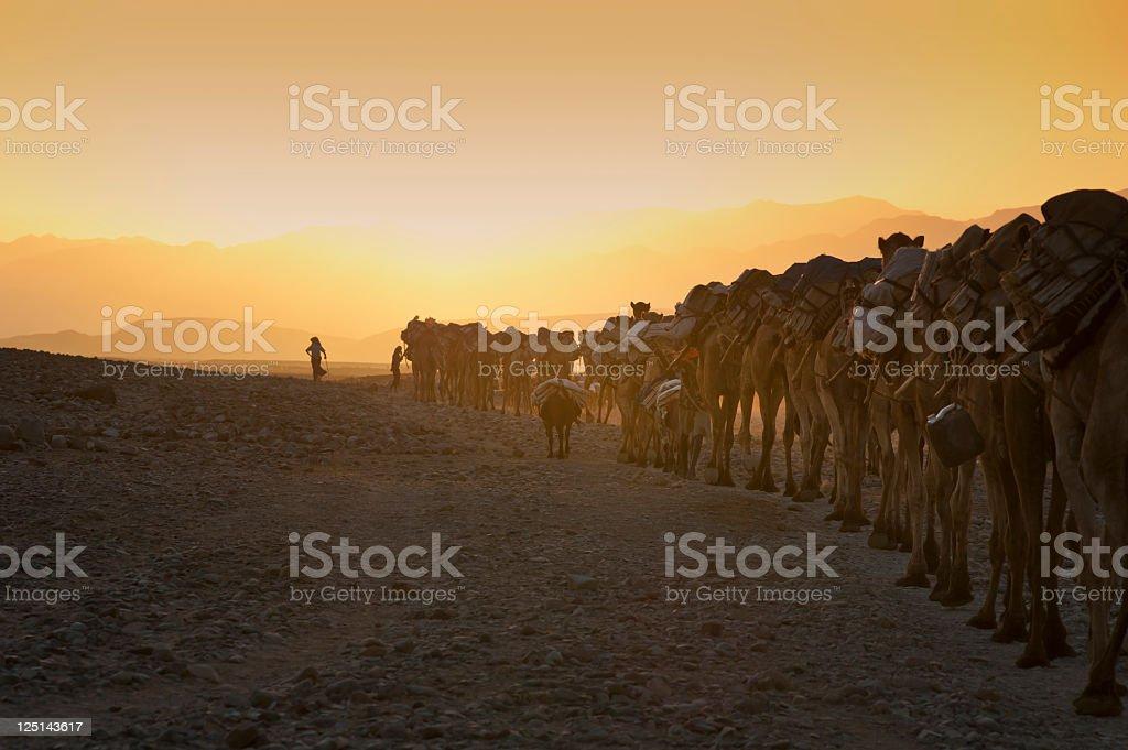 Camel caravan against the sunset, Danakil Desert, Ethiopia stock photo
