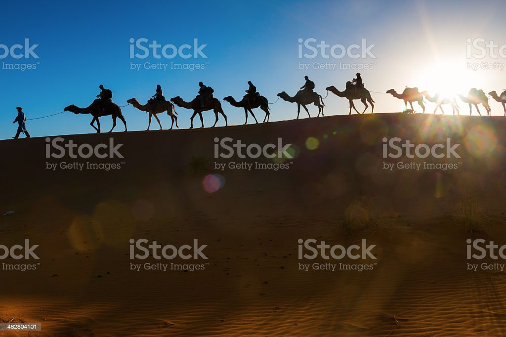 Camel caravan going through the desert stock photo