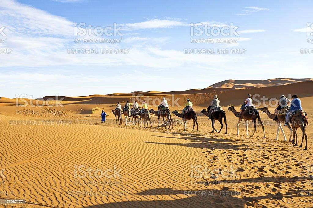 Camel caravan going through the Sahara Desert Morocco stock photo