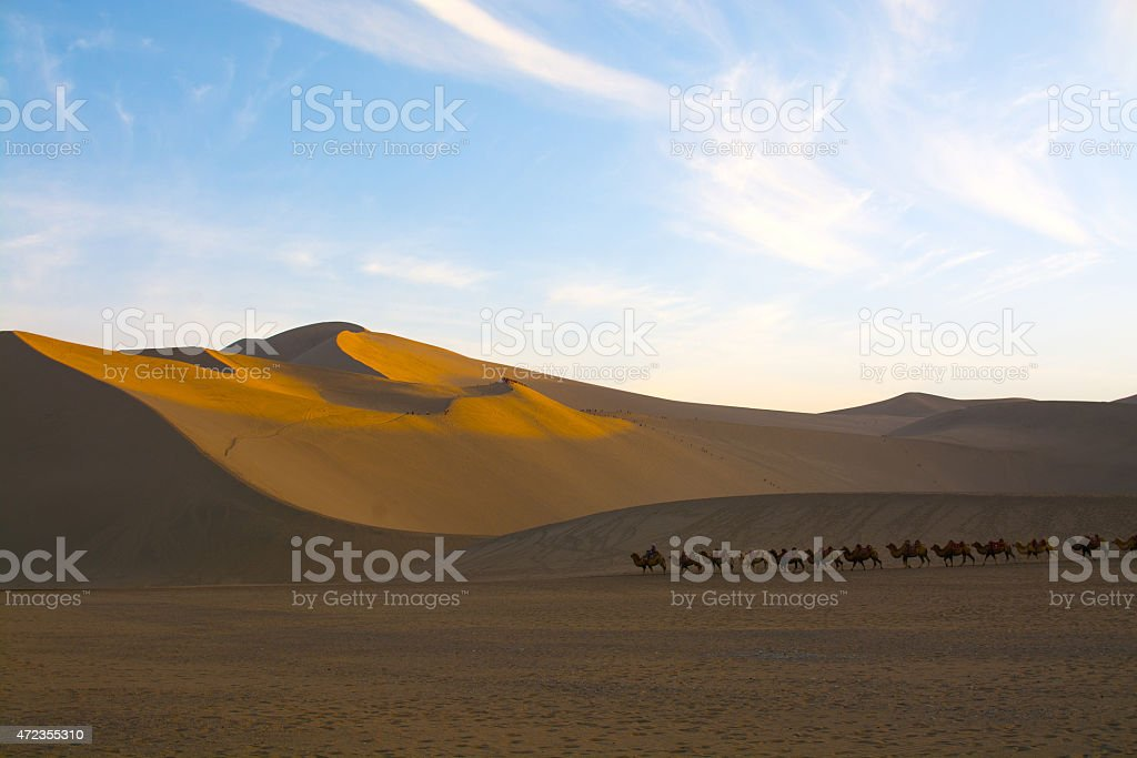 Camel caravan going through the sand dunes stock photo