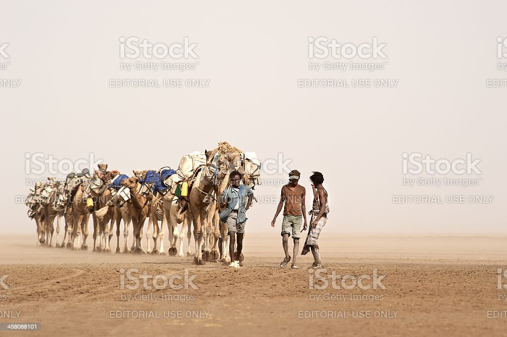Camel caravan in a sandstorm, Danakil Desert, Ethiopia stock photo