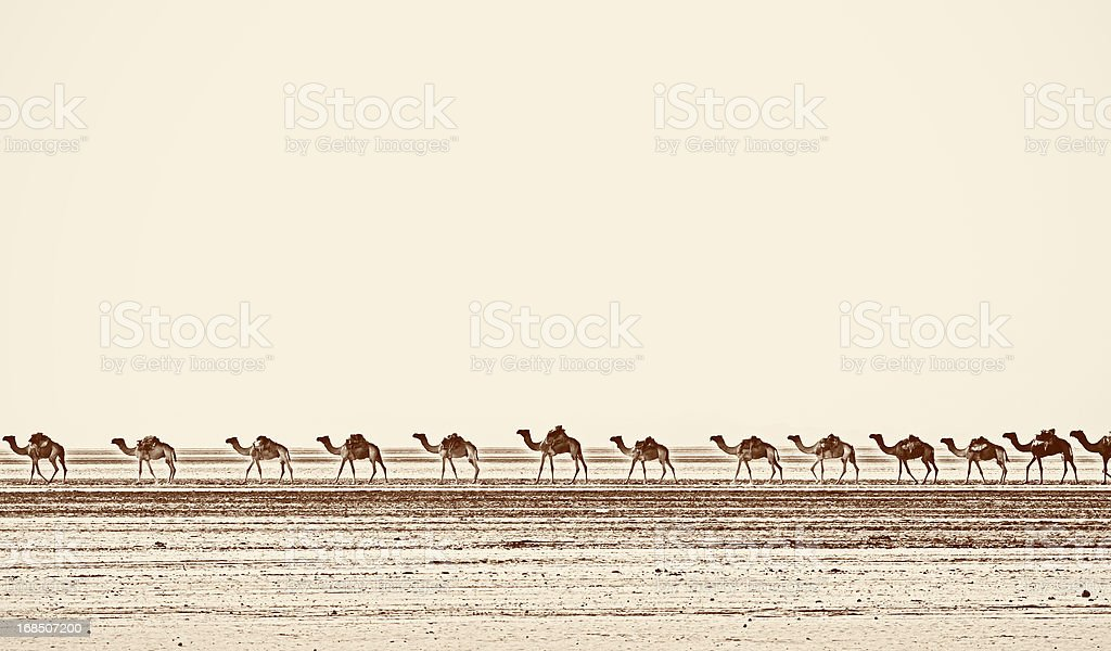 Camel caravan in Danakil Desert, Ethiopia stock photo