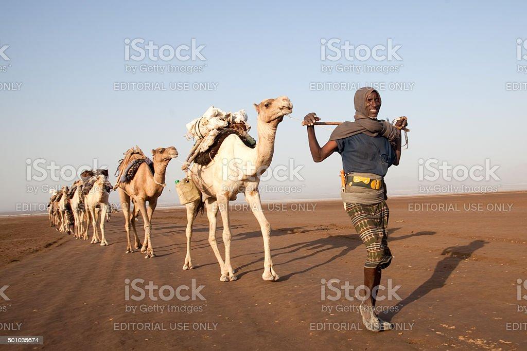 Camel caravan in the Danakil Desert Ethiopia stock photo