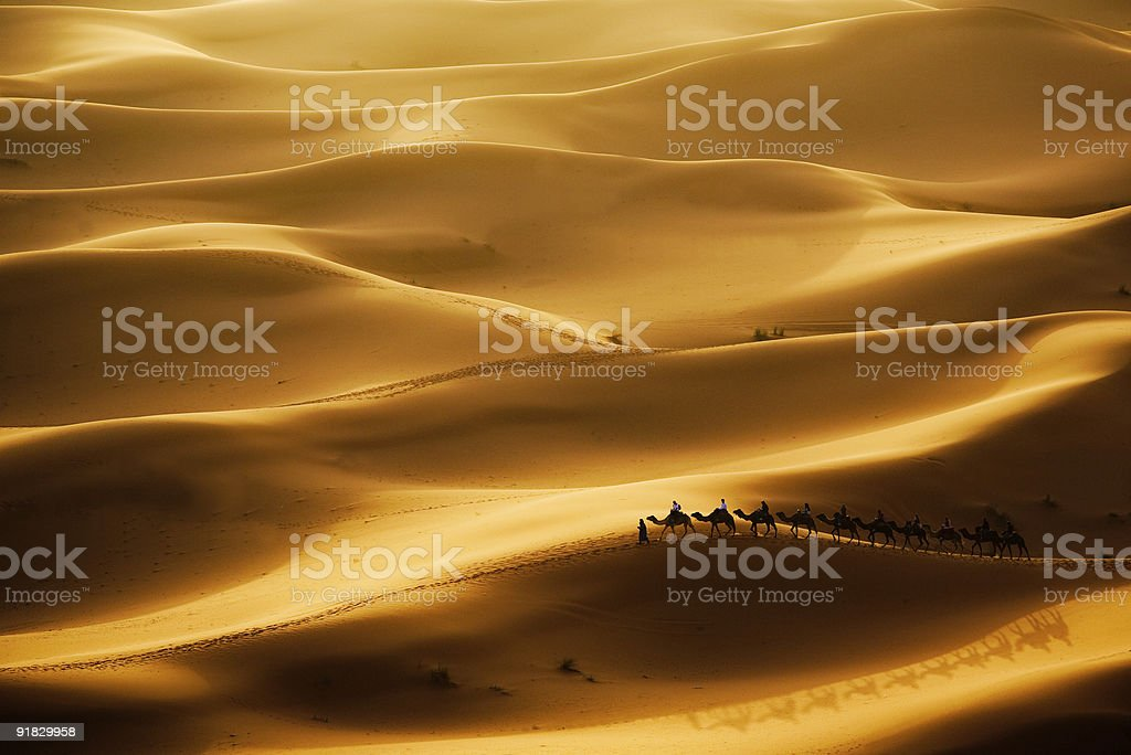 Camel caravan in the middle of the desert stock photo