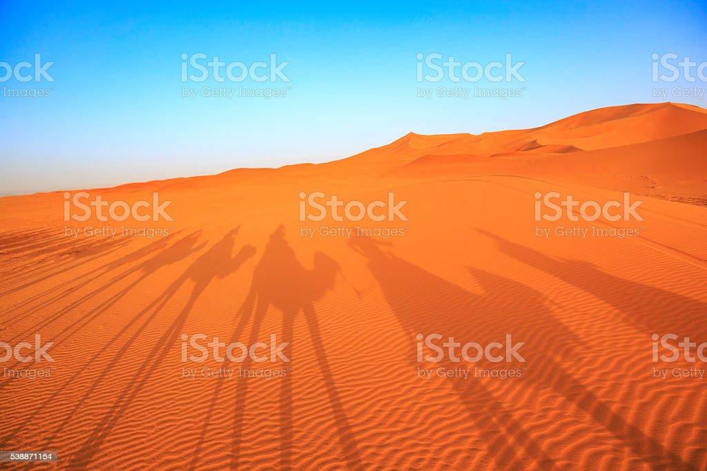 camel caravan in the Sahara Desert stock photo