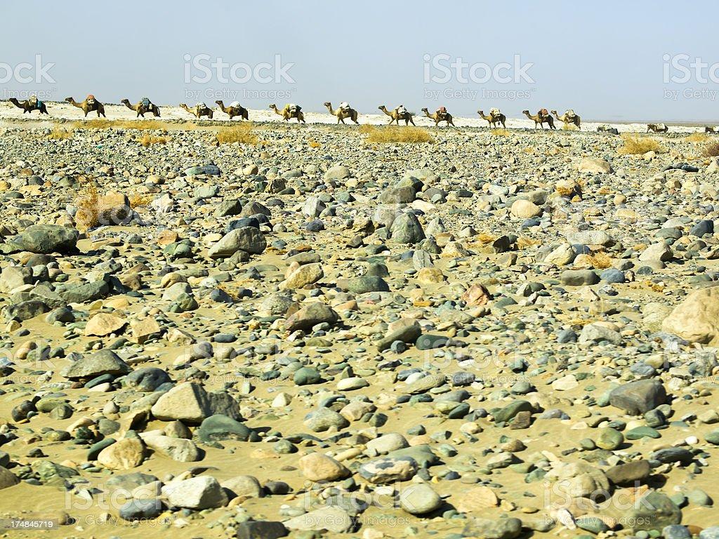Camel caravan stock photo